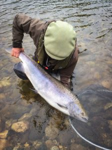Lakselva Big Salmon
